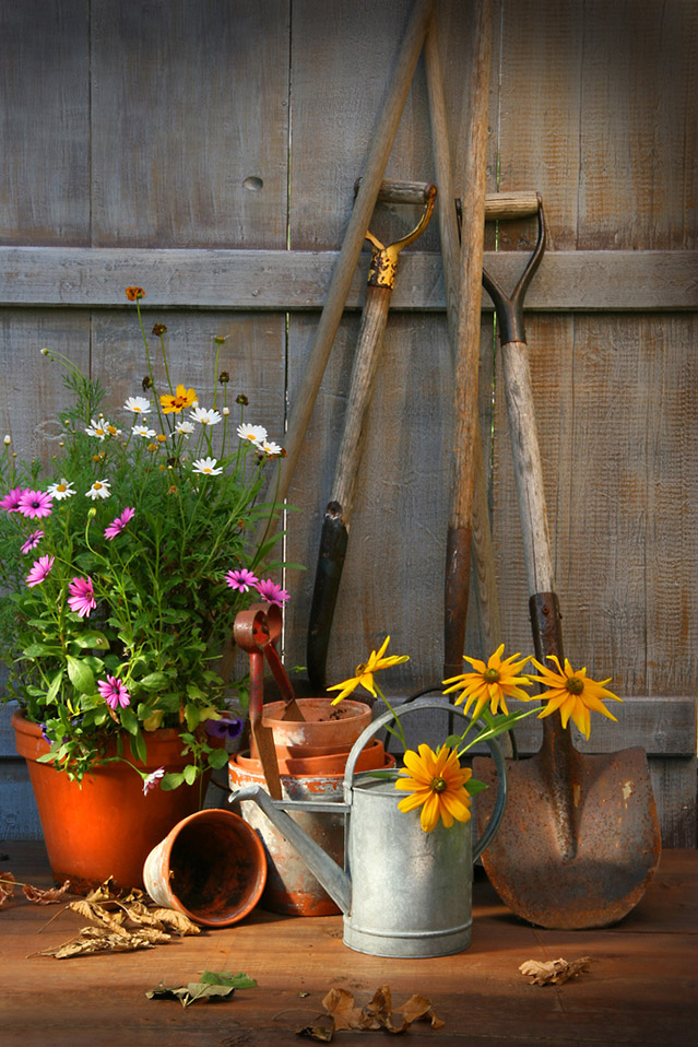Mental and emotional benefits of gardening