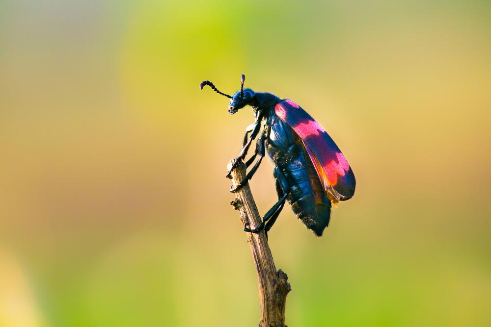 Insecto sobre rama